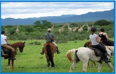 Horse Safari tour packages